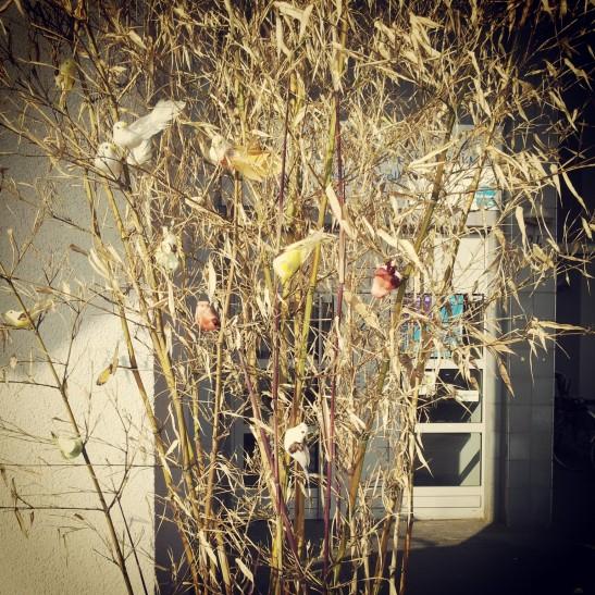 Birds are singing in the trees (Zossener Strasse)